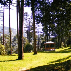Adventure Activities in Dhanaulti and Best Places to Visit